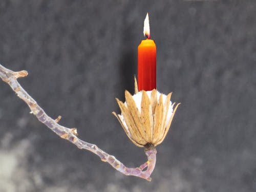 tulip tree seed pod with candle