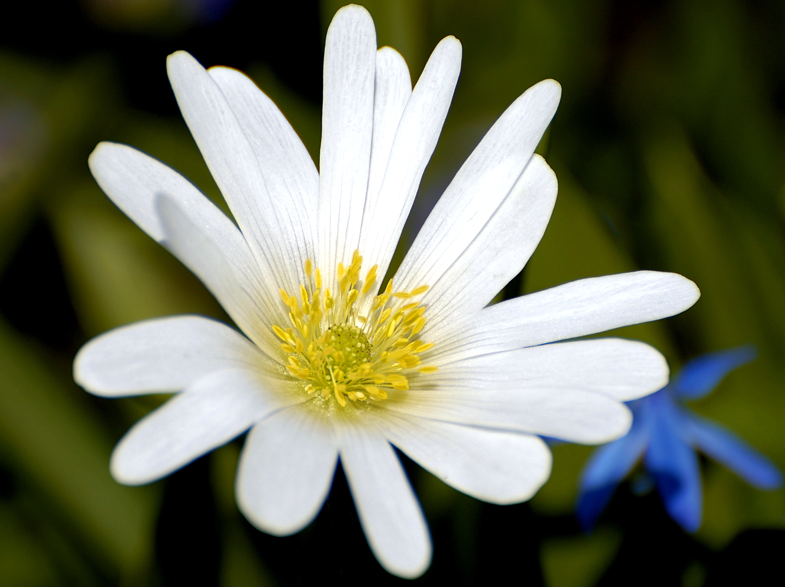 [Image: White_Flower_Closeup.jpg]