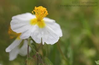 macro-fleur-blanche-jaune