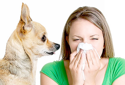 Can I Be Allergic To Certain Dogs