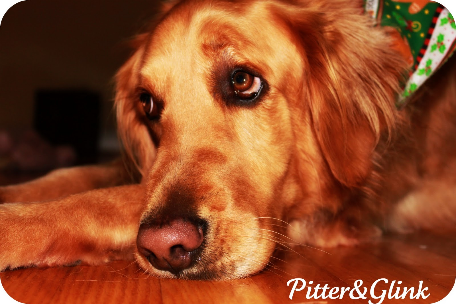http://4.bp.blogspot.com/-m_Hwd0ZSDSg/TvVWzPW3CuI/AAAAAAAAAvY/W3hVTNOhabY/s1600/Lily.jpg