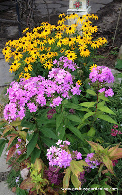 Phlox, Black Eyed Susan and Yarrow