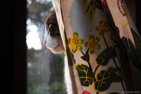 aliciasivert, alicia sivertsson, alicia sivert, gotland, semesterlivet, semester, cat, katt, teno, tno, fönster, window