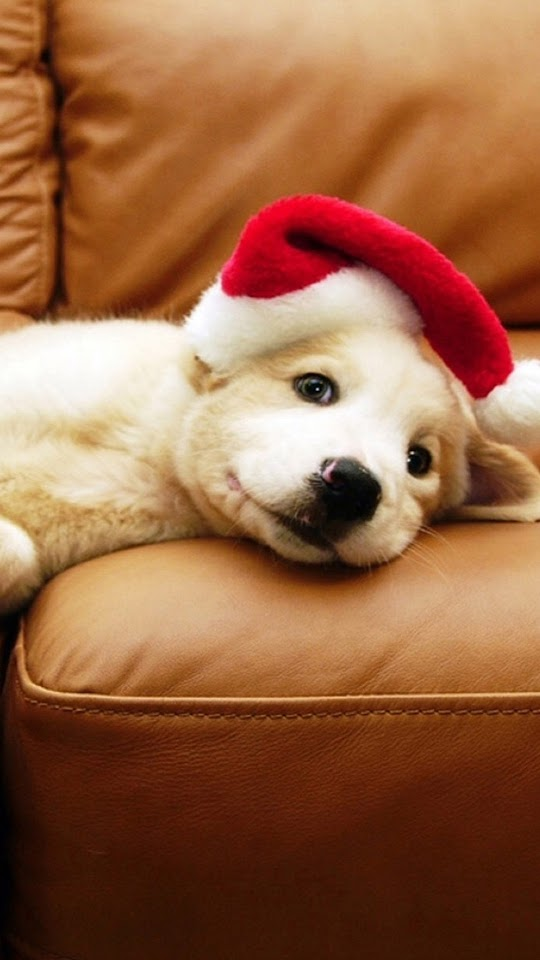 Christmas Puppy  Galaxy Note HD Wallpaper