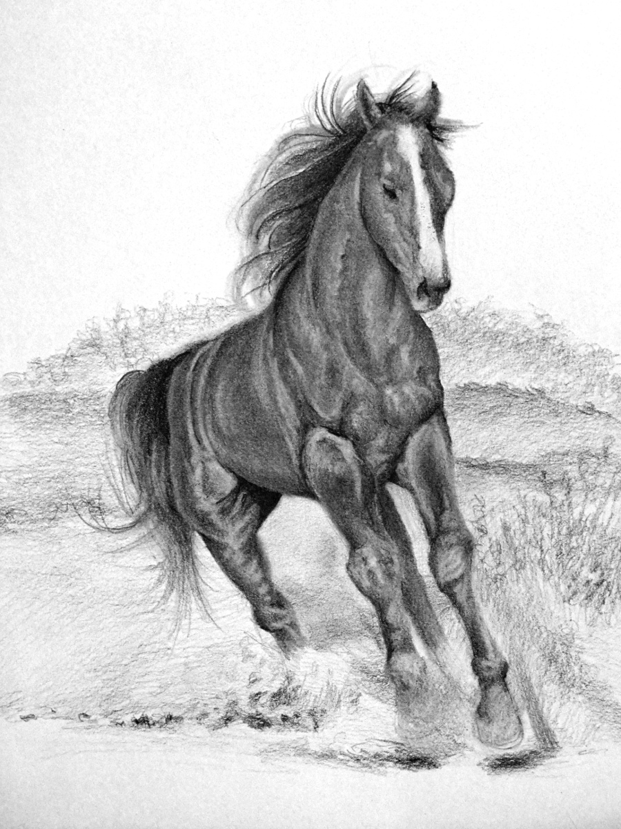 Realistic Running Horse Sketches