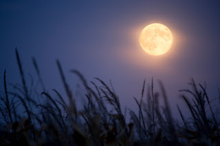 cool wallpapers: scary full moon