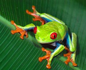 rashid555 rainforests on emaze