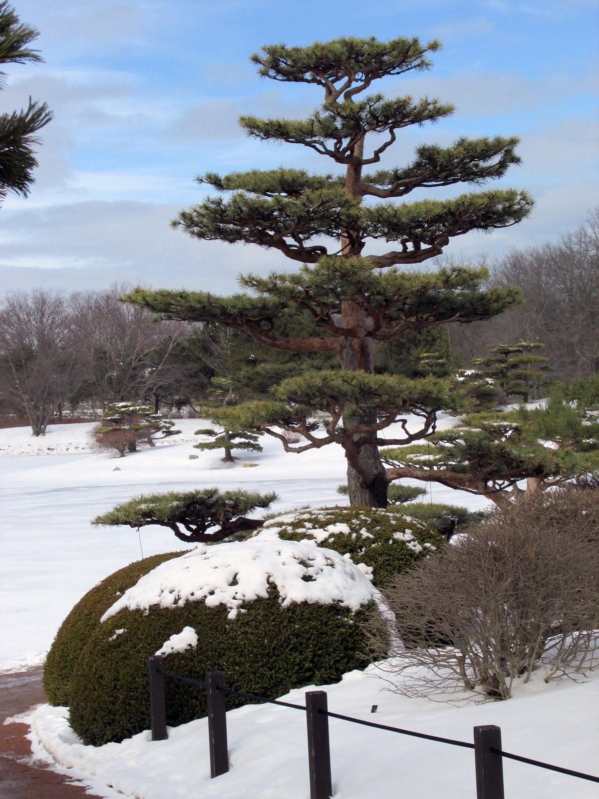 a japanese garden in winter the hortiholic