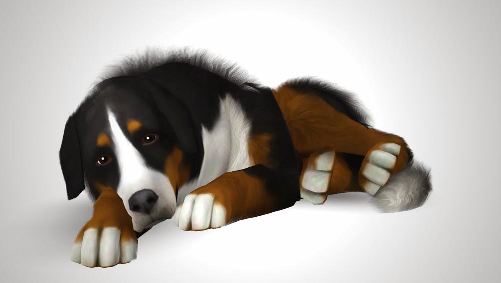 my sims 3 blog bernese mountain dog by morganabananasims