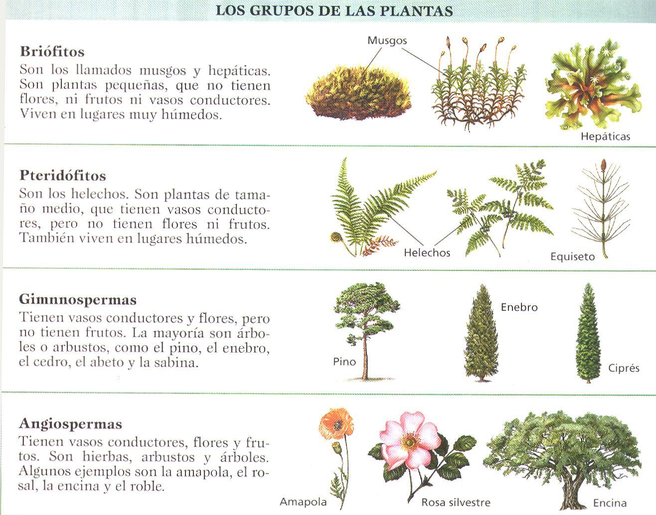 Lolita gomez julio 2012 for Las caracteristicas de los arboles