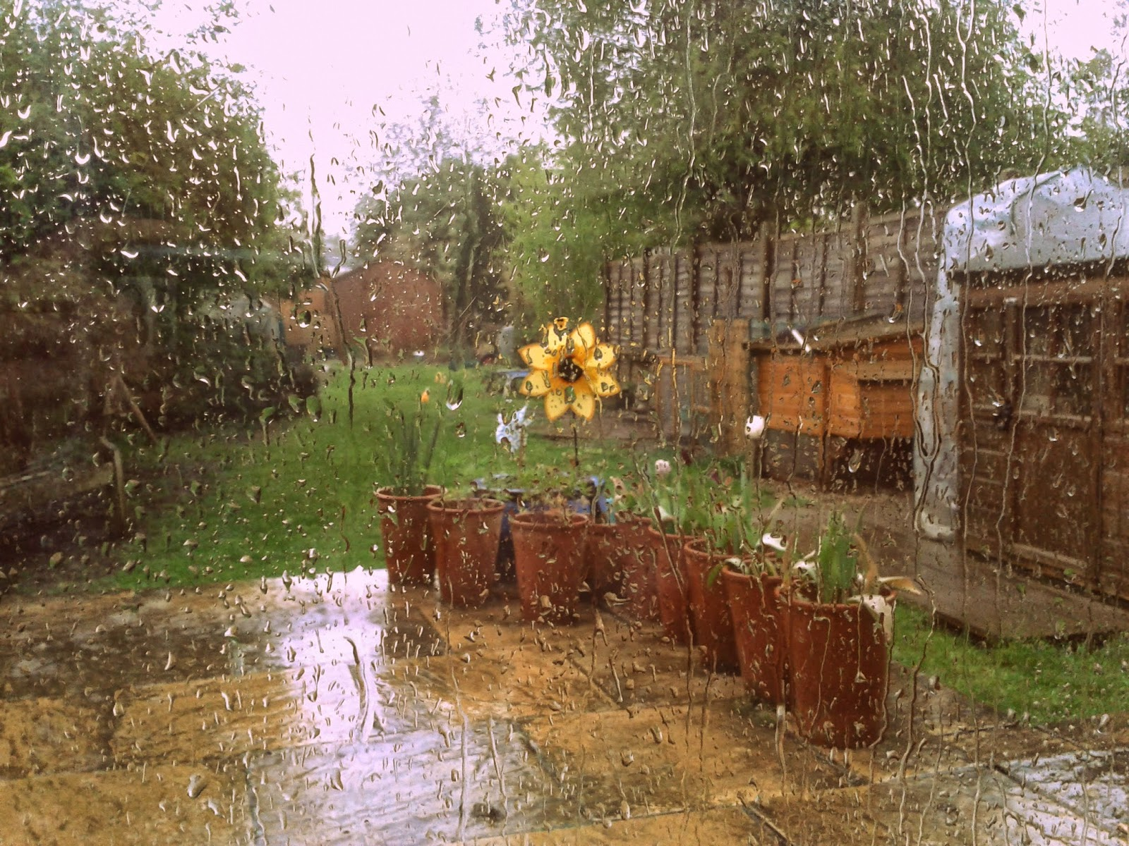 Project 365 day 113 - April showers // 76sunflowers