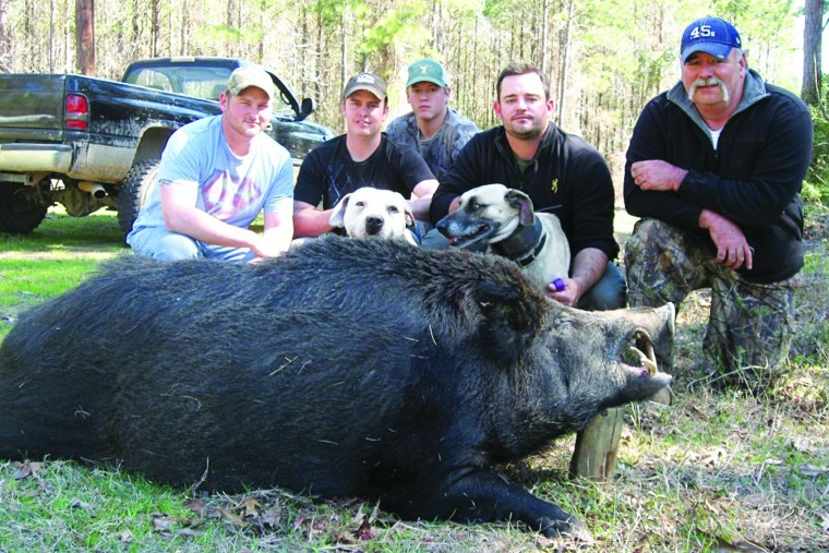 """hog problem Feral hogs are a texas-sized problem that's growing exponentially with each litter """"despite the best efforts through trapping, hunting, aerial shooting and state incentivized depopulation programs, [stakeholders] have failed to keep the population at a manageable level,"""" he said."""