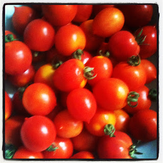 Tomato Principe Borghese da Appendere or Eternal Tomatoes, Little D's favourite.