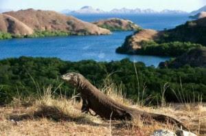 Wisata Pulau Komodo Indonesia