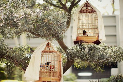 Hayku a get inspired bird cages as home decor for Got home decor