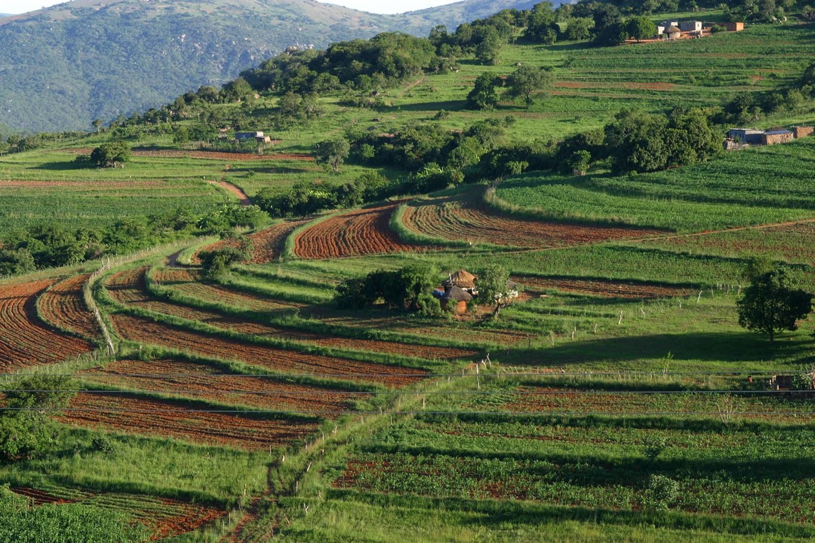 Manzini Swaziland  city photo : ... Swaziland Umbuso weSwatini , Africa Mbabane, Manzini, Simunye