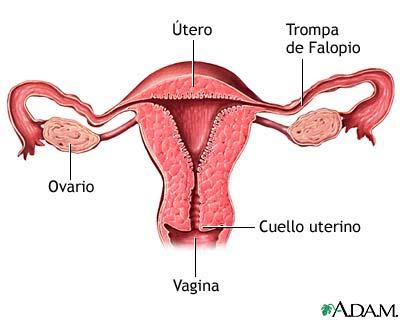 El exceso de sangrado vaginal causa