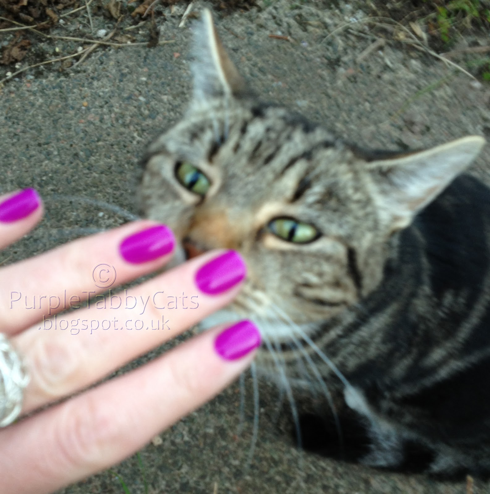 red carpet manicure what a surprise with tasha red carpet