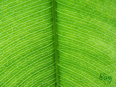 Plants Exhibit The Same Senses As Humans And See, Touch, Smell, Hear and Even Taste