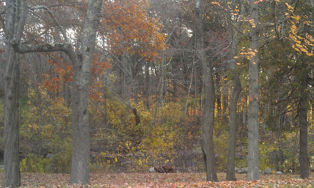 colorful trees before Sandy