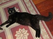 . um gato preto ( tendo entretanto estabelecido uma cumplicidade já, .