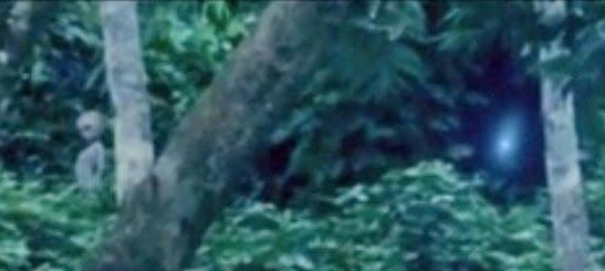 Extraterrestre filmado en la selva de Brasil Alien1_1395166a