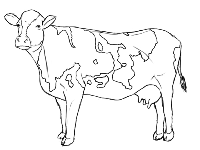Line Drawing Cow : How to draw a cow central