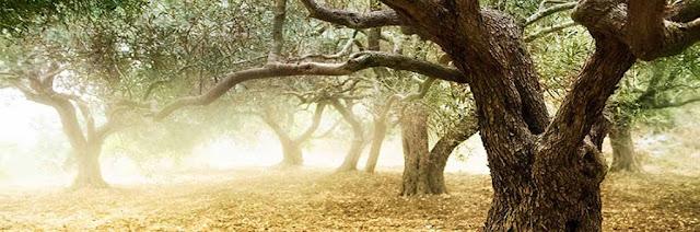 olivelia macrovita organic cosmetics soins cosmétiques naturel biologique