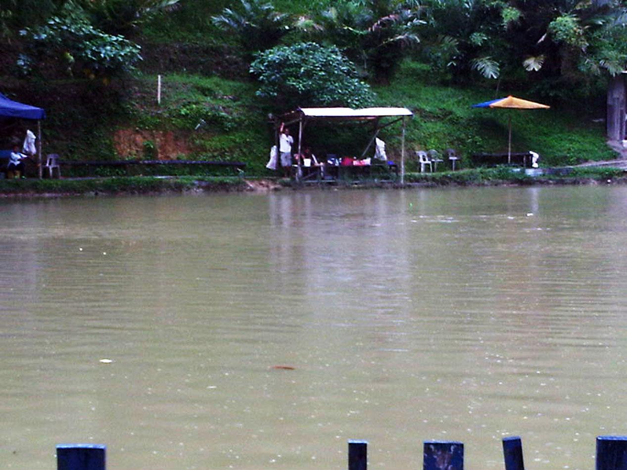 JoranPancing Catch Amp Release Di Kolam Pak Din Bukit
