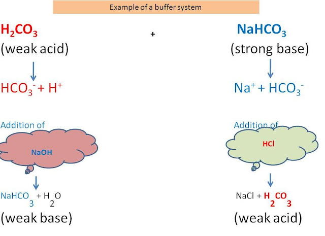 how the ph changes by adding acid and base to the buffers essay And pictures about acid-base chemistry at mixture and so the ph does not change buffers are of ph is a tenfold change in acidity acid-base.