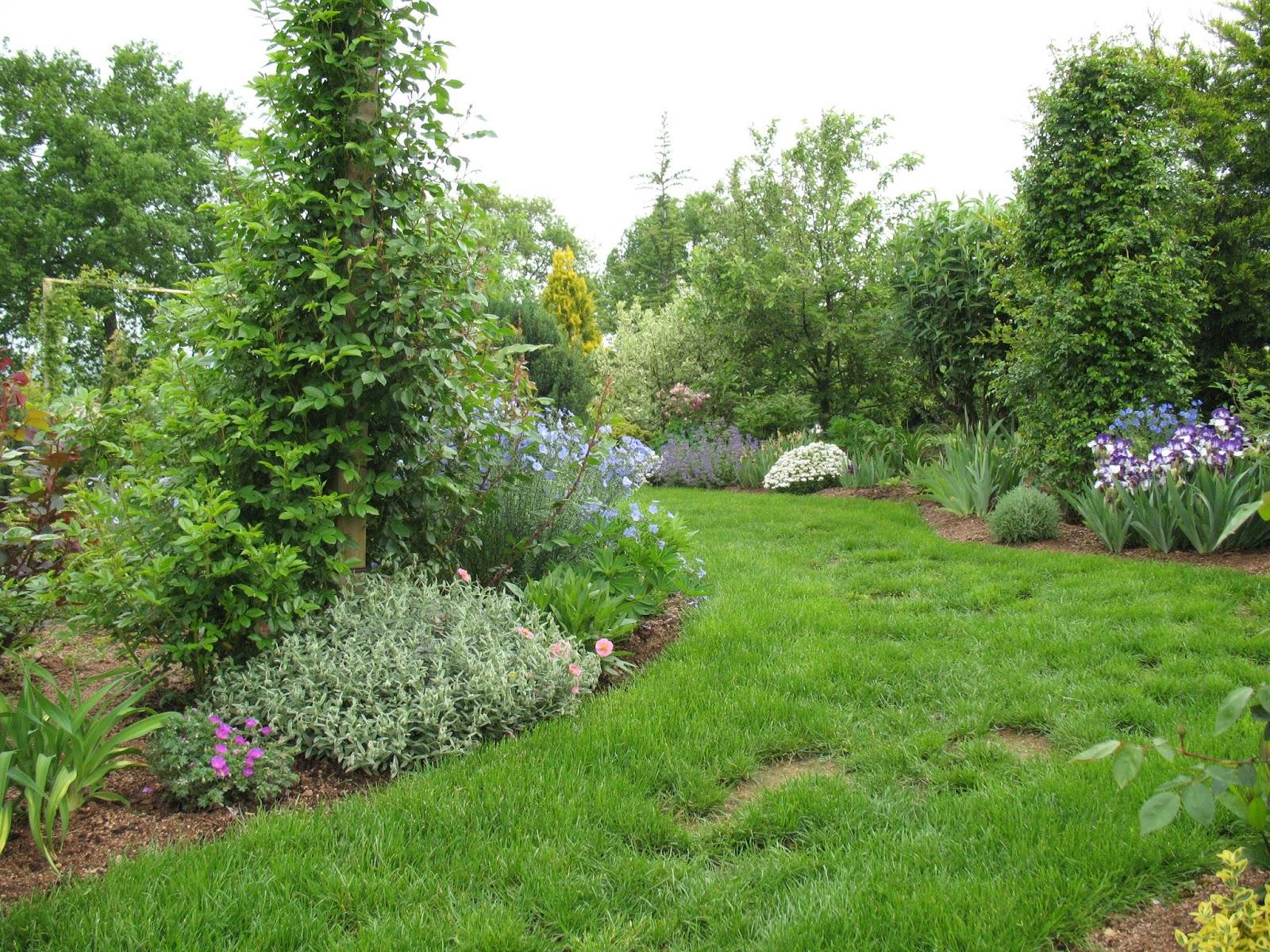 Roses du jardin ch neland lin vivace bleu for Vivace floraison hivernale