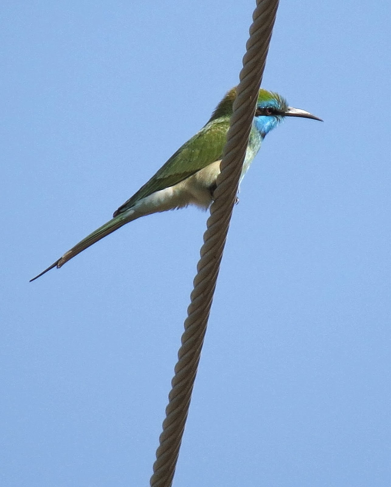 bee eater the transition to the About jossey-bass jossey-bass publishes products and services to inform and inspire those interested in developing themselves, their organizations and.