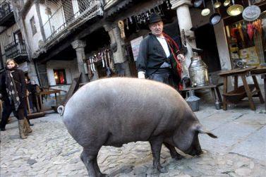 cerdo de San Anton por las Calles de La Alberca