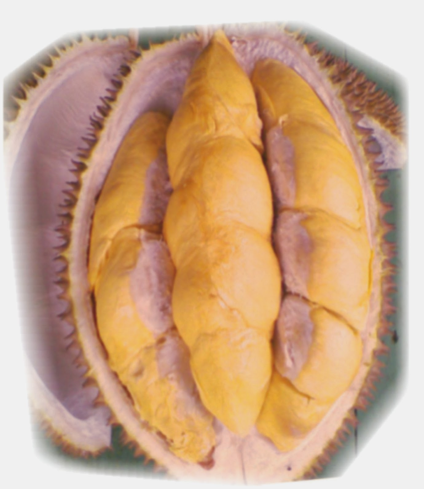 Warna dan Bentuk Daging Buah Durian Menoreh Kuning