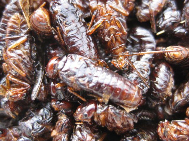 Eating Flying Termites | Lilongwe Home
