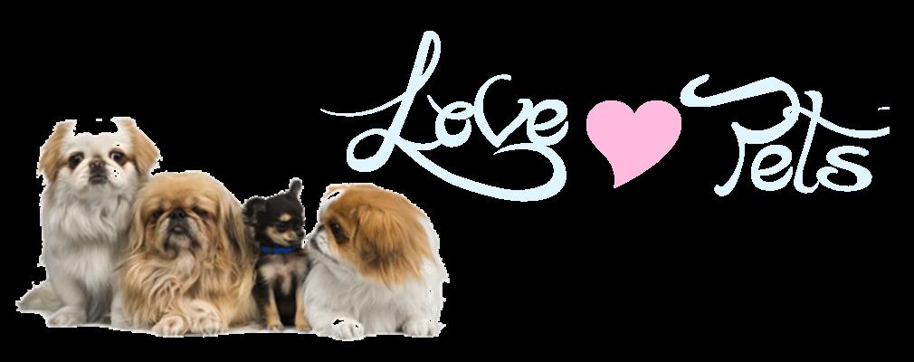 Lov´s Pet // Blog Oficial