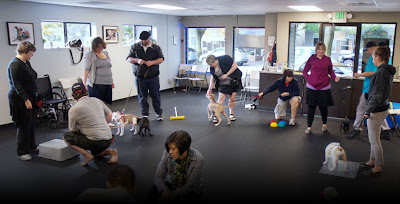 pet-dog-obedience-trainer