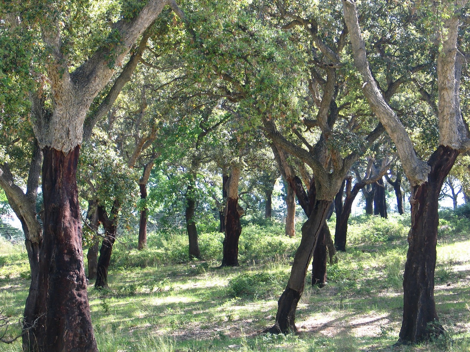 50 hikes in and around tuscany: the ecosystems of tuscany