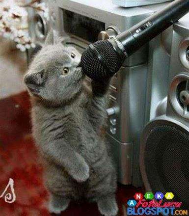 foto lucu Kucing Sedang Karaoke