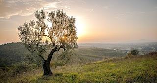 albero al tramonto