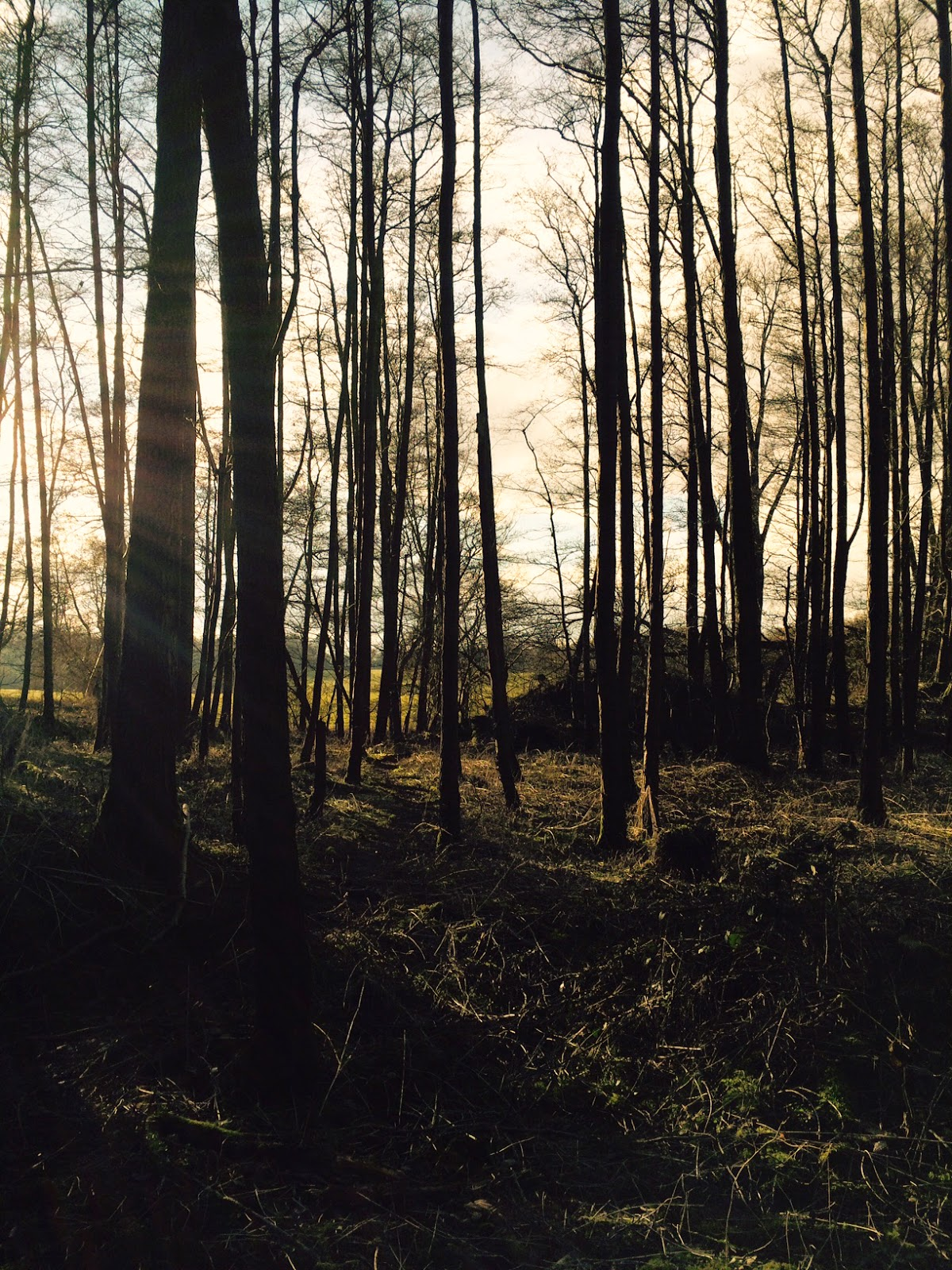 Much Hadham woodland - photograph by A Handmade Cottage