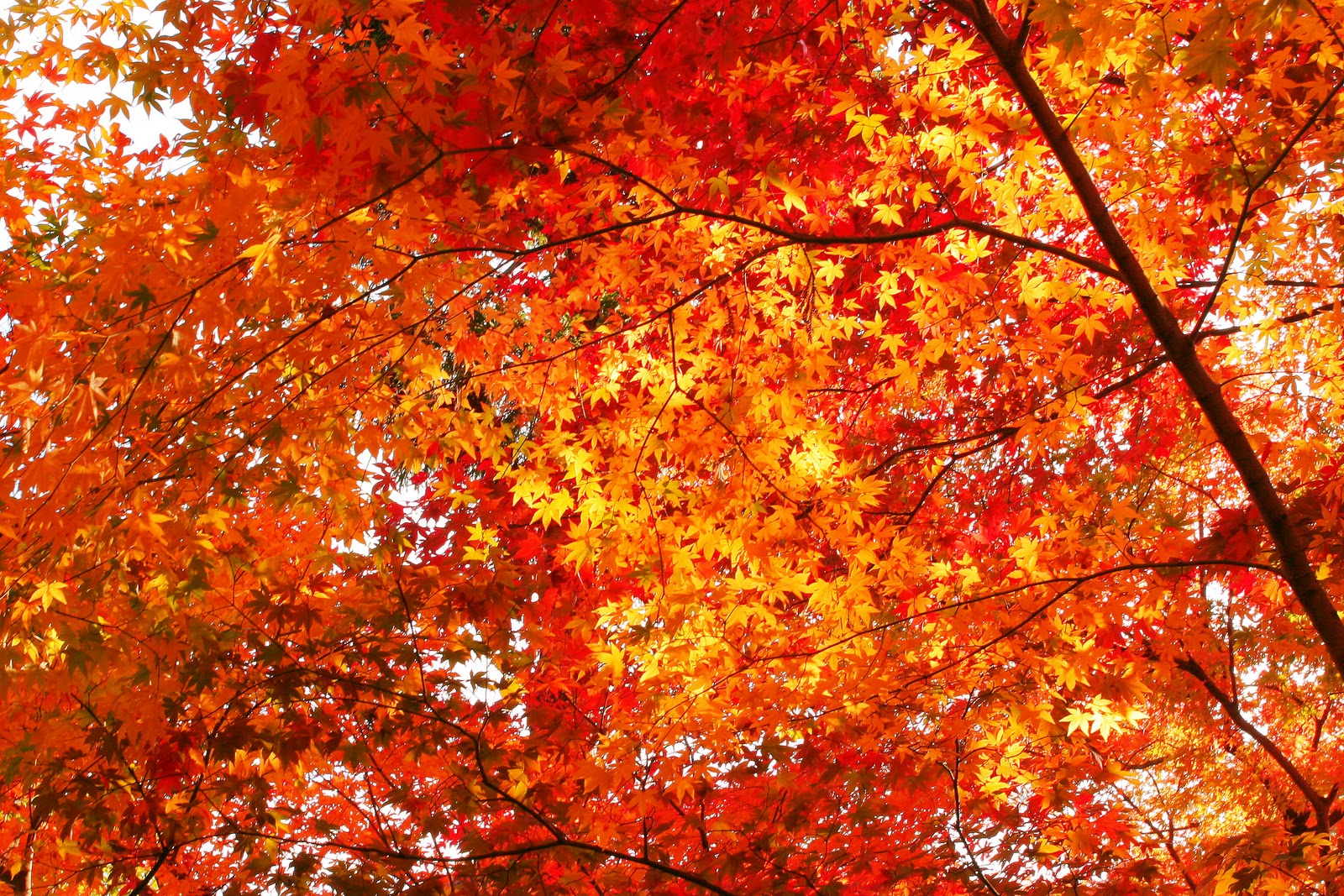 http://4.bp.blogspot.com/-mfQG7VetbU4/TuEy0begzpI/AAAAAAAAAvU/a-CBsTlJ-sI/s1600/autumn-leaves_beiz.jp_L07918.jpg