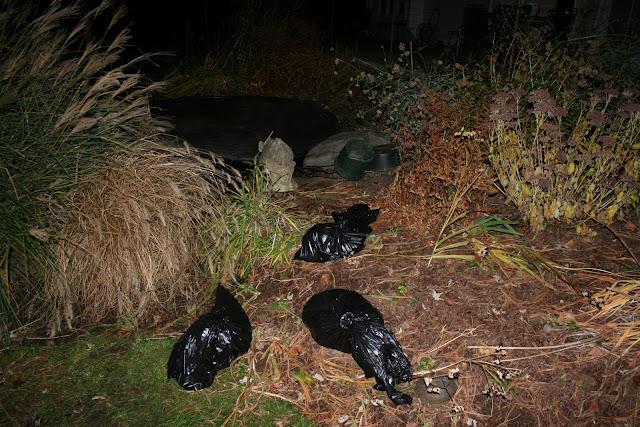 dead koi in bags