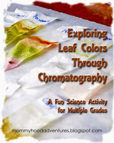 Exploring Leaf Colors Through Chromotography - Mommyhood Adventures
