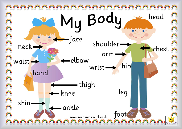 detailed lesson plan in parts of the body The lesson plan below is designed to be used with the drugs + your body: it isn't pretty poster/teaching guide, which includes a full-color mini-poster, four turnkey different parts of the body, including the brain, as well as the nonphysical effects on their lives (eg, difficult relationships, poor grades, problems with friends.