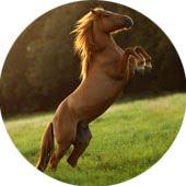 Não existem cavalos bravos. Existem pessoas que não sabem lidar com eles.