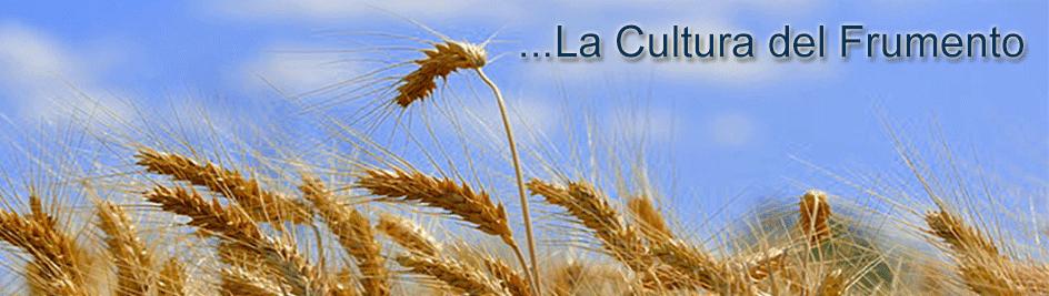 ...La Cultura del Frumento