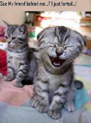 Kucing Malaya :3