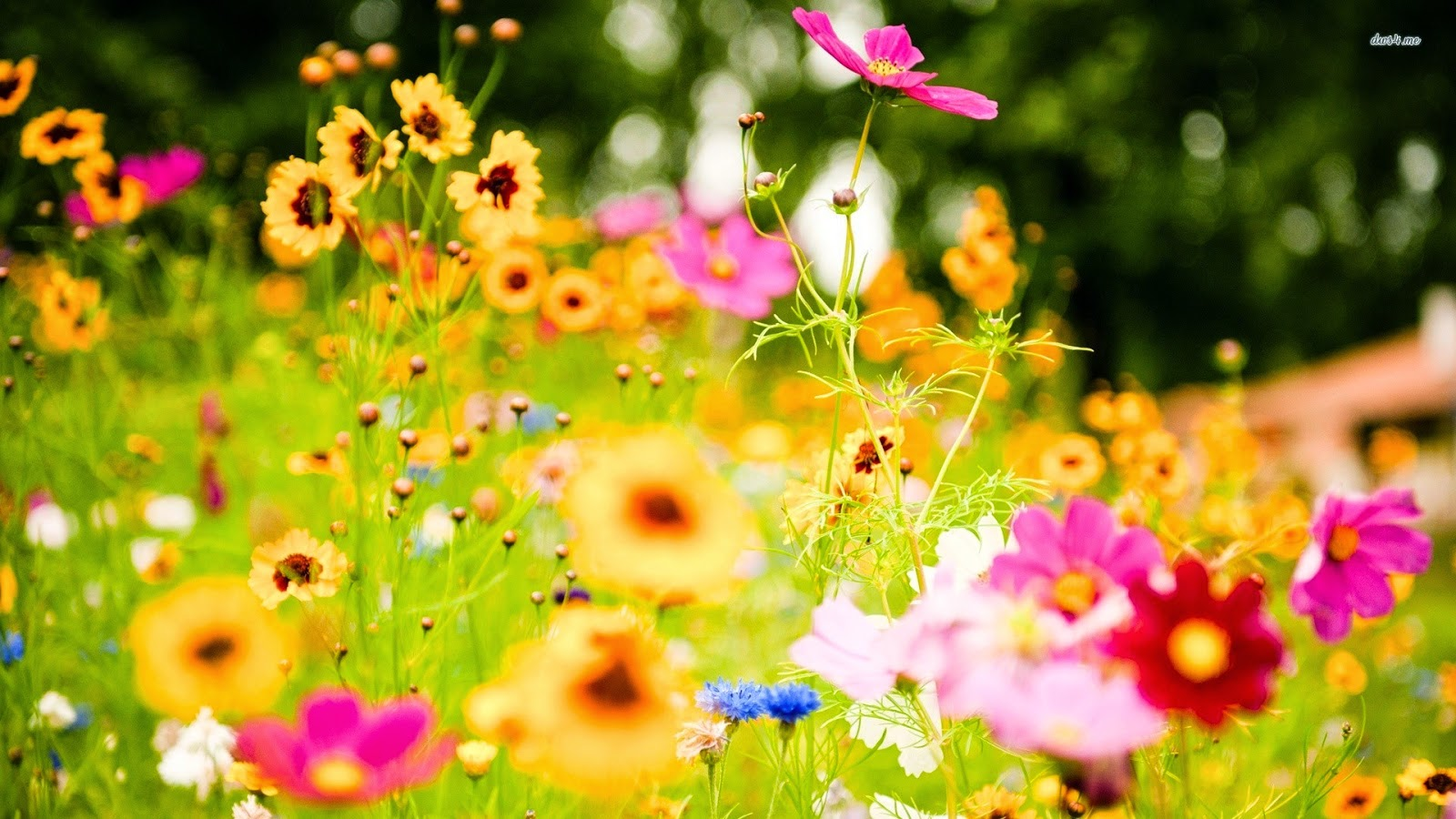 Colorful Flowers Wallpapers For Pc Free Download Online Fun