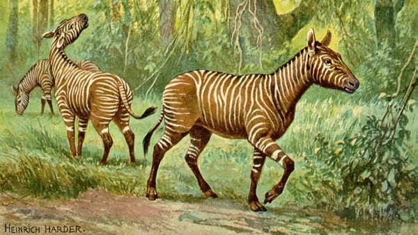 kuda kuno, Hypohippus